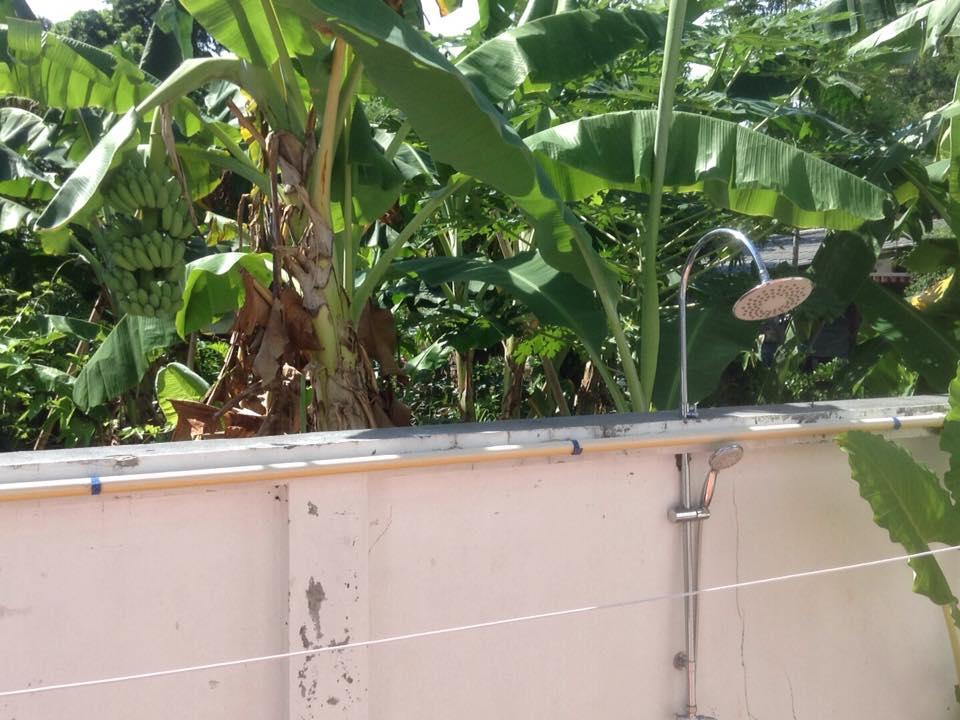 бананы в соседском саду